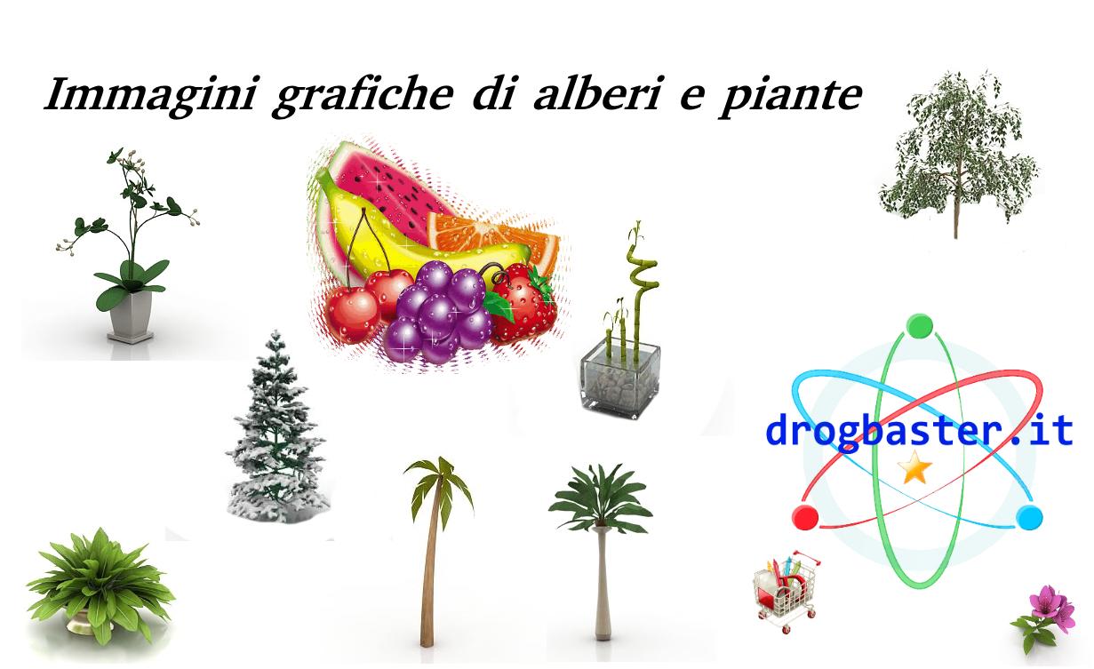 Immagini Di Piante E Alberi immagini grafiche di alberi e piante