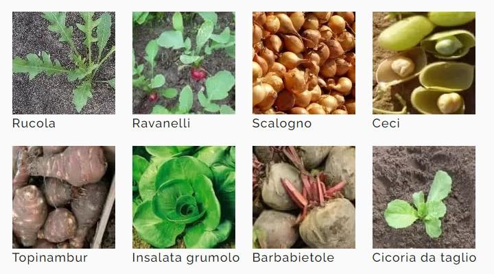 Calendario di semina per il mese Marzo
